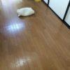 夏は床に直寝で布団は要らない。
